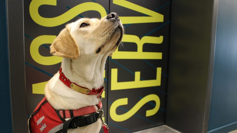 Cold Nose Warm Heart: Meet Sadie of Hero Dogs